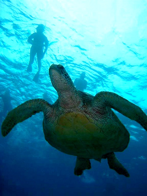 Snorkeling: An adventure for any age!