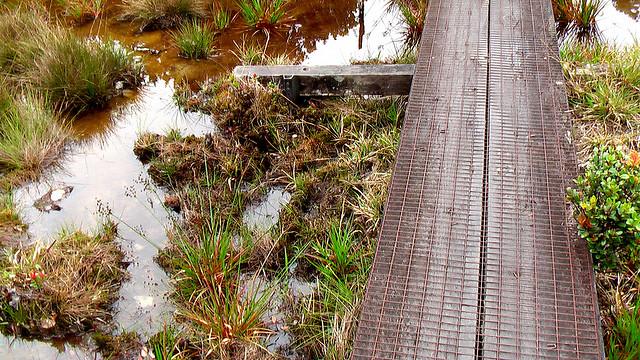 Swampy Adventures on Kaua'i