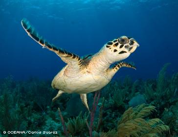 Sea Turtles: Marvelous & Fragile